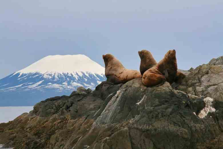 Sitka View with Sea Lions - peacelovetrees via Flickr