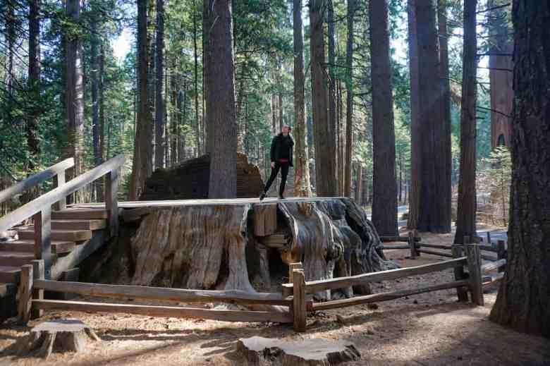 Calaveras Redwoods - Valerie on Discovery Tree Stump