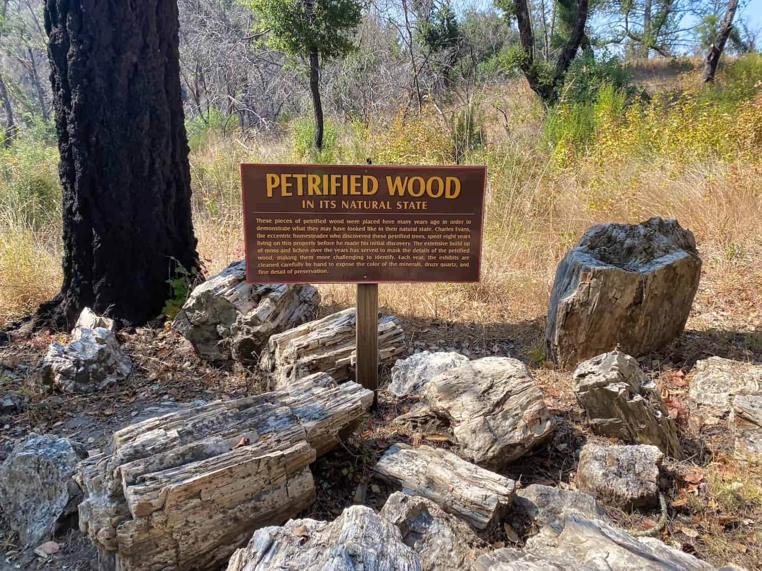 Redwoods Road Trip - Petrified Redwoods