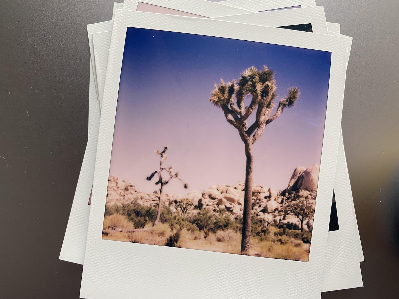 Polaroid Now Review: Joshua Tree