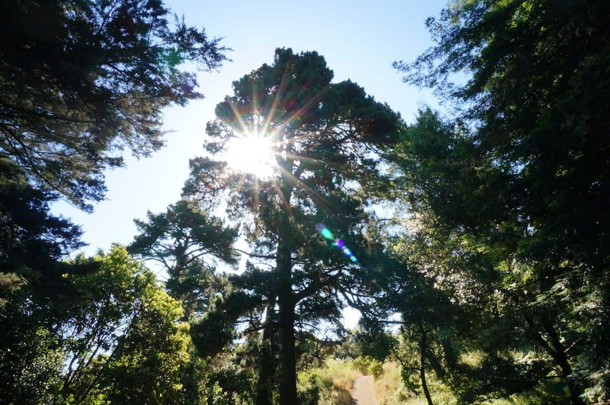 Bay Area Getaways - Oakland Redwoods
