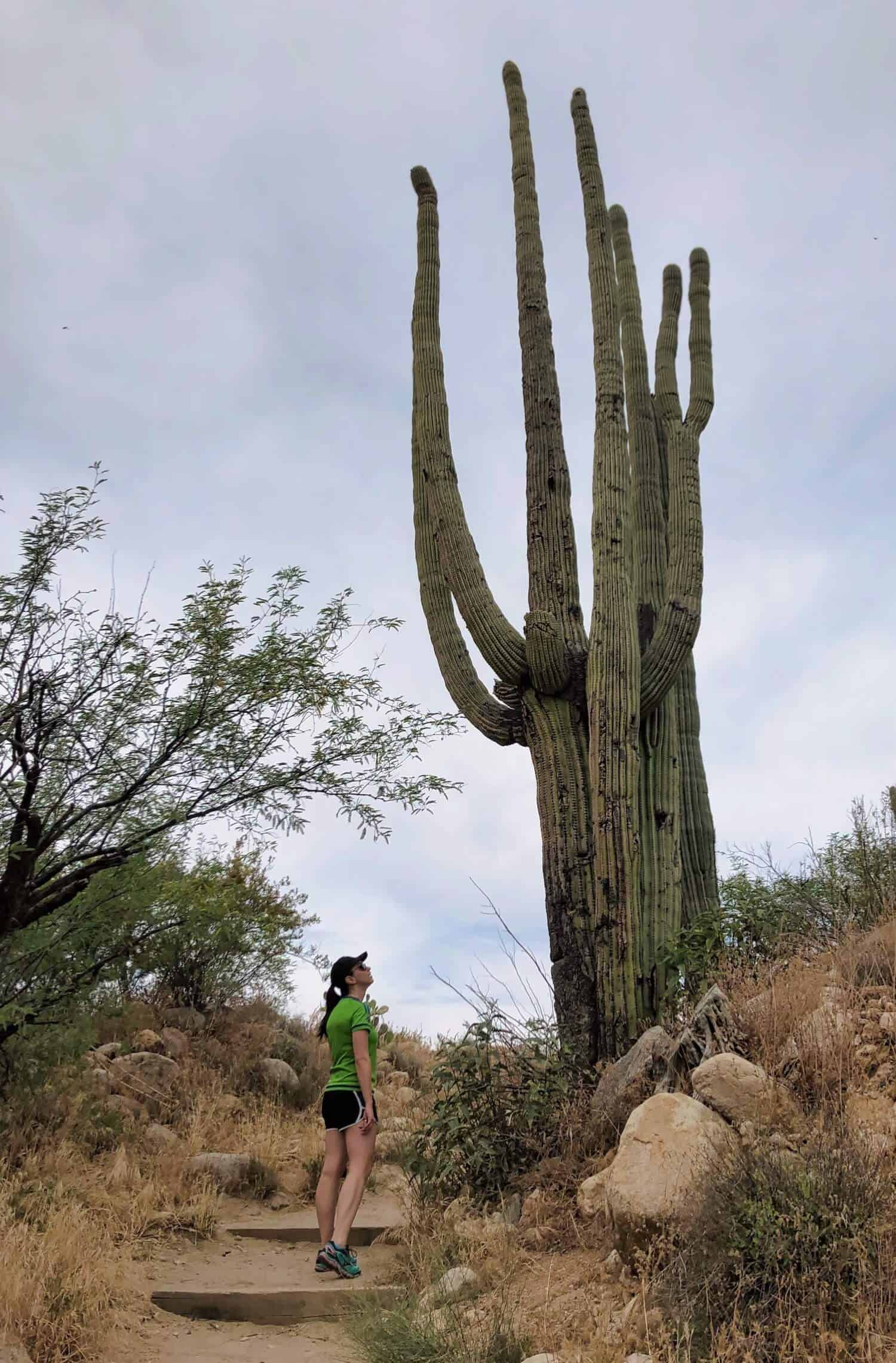 National Parks in the West - Saguaro
