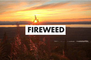 Fireweed Definition Card