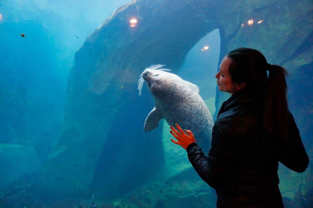 Alaska SeaLife Center - Seal