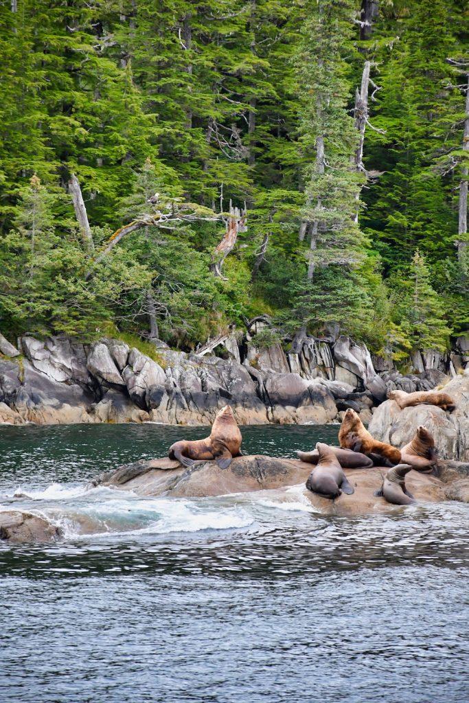 26 Glacier Cruises Review - Wildlife - Sea Lions & Eagle