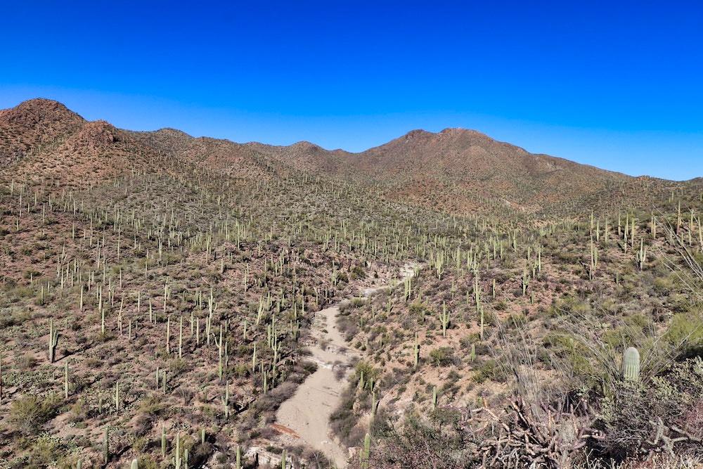 Saguaro National Park Itinerary - King Canyon Trail