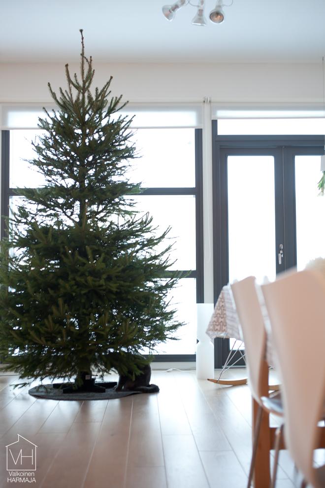 tuuhea_joulukuusi