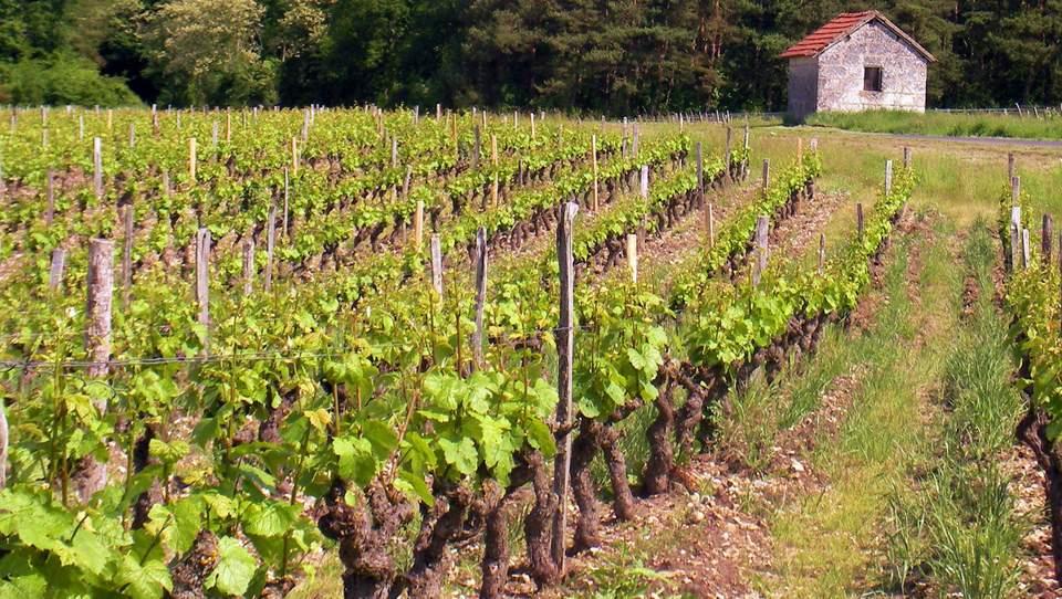 Chambre Dhtes Et Gte Dans La Loire La Valle Des Vignes