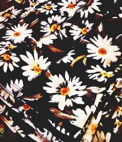 Florio.DaisyPicture