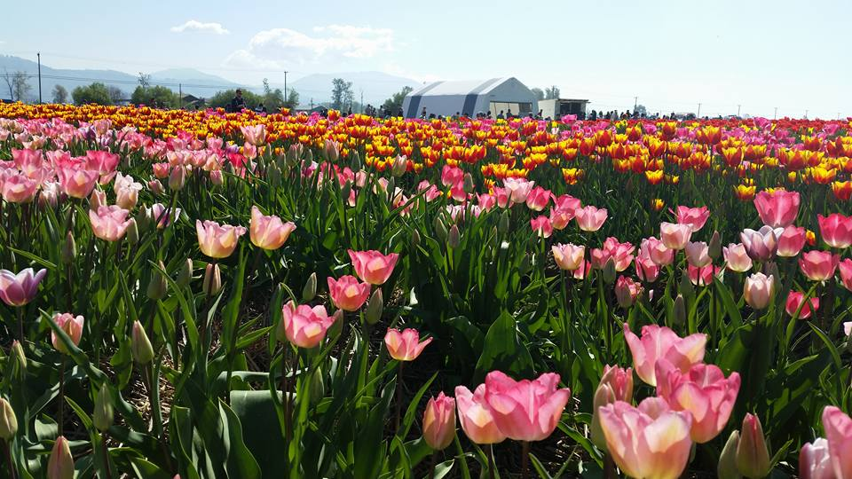 Things to do for Easter in the Fraser Valley