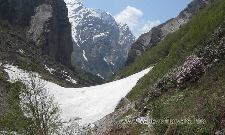 Beautiful Glacier seen in June Month. Please note the beautiful Rhododendron flowers on right side of trek.