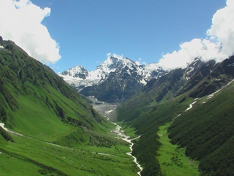 Valley of flowers from top