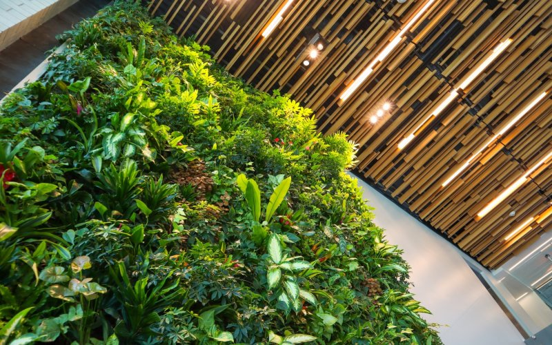 Artificial or Real Plants: What's best for your Office?