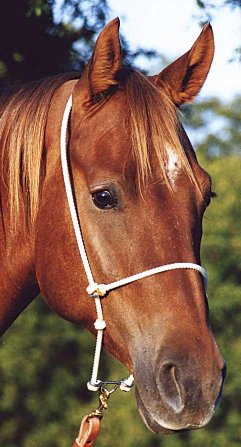 Headset Tiedown Rope Martin Saddlery   Supplies Tack