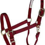 Personalized Horse Halter Tack Supplies Valley Vet Brookside Personalized Halters Halters Le