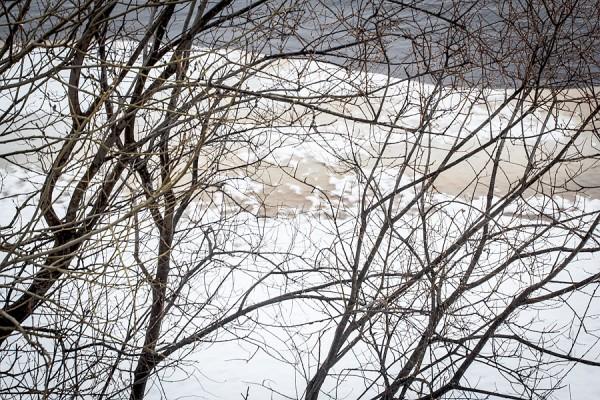 Oksien kirjoitusta Torniojoen rannalla keväällä 2012
