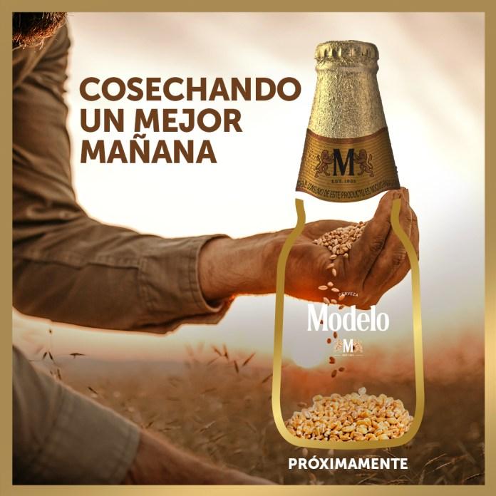 Crearán cerveza con cebada comprada durante contingencia por COVID-19