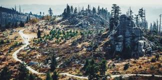 Reforestación, acción clave para salvar el planeta