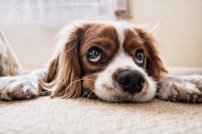 Full Trust apoya a perros en situación vulnerable