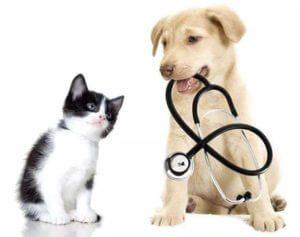 Duvidas de Plano de Saude Pet – Escolha o melhor para o seu amigo
