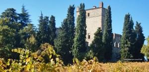 Castello di Serravalle vigne