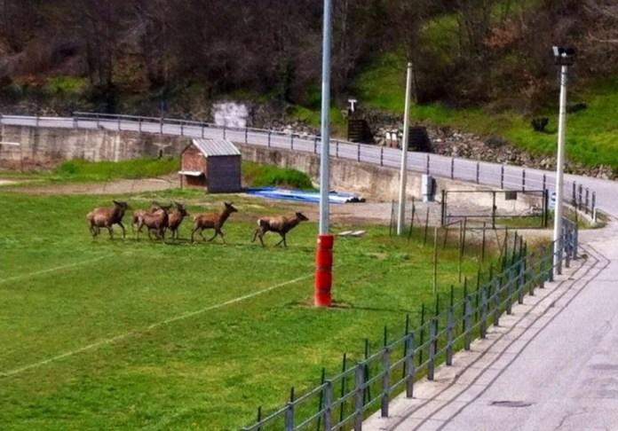 Giaglione-cervi-al-campo-sportivo
