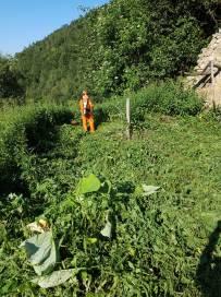 rimozione vegetazione Presa Casel 7