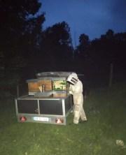 furto ladri api villar dora