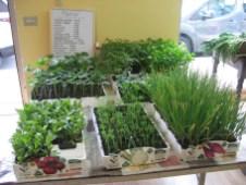 azienda agricola mattia torchia oulx