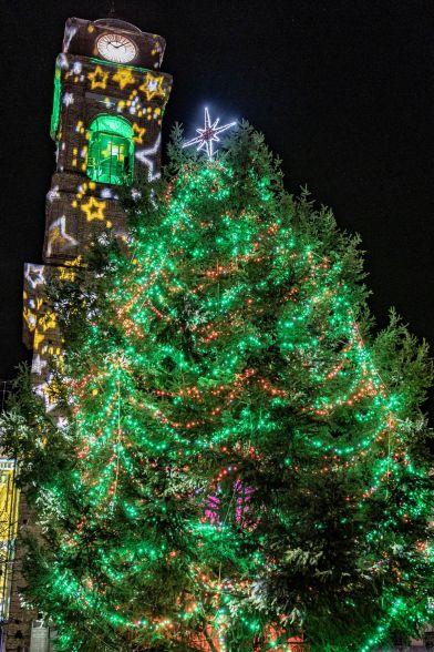 albero e campanile foto roberto grano R