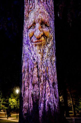 albero parlante frondo foto roberto grano R
