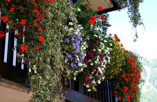 Nave  Un paese pi bello con Balconi fioriti