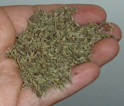 health benefis of anise 2