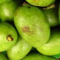 health benefits of mango powder