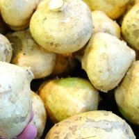 Health benefits of Jicama root