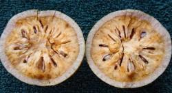 Cut bael fruit