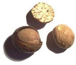 Muscade / Nutmeg seed