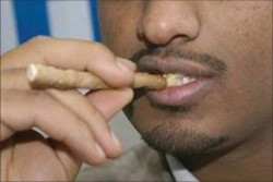 how to chew miswak