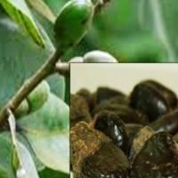 Health benefits of Semecarpus anacardium