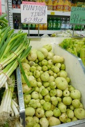 punjabi tinda in indiatown supermart
