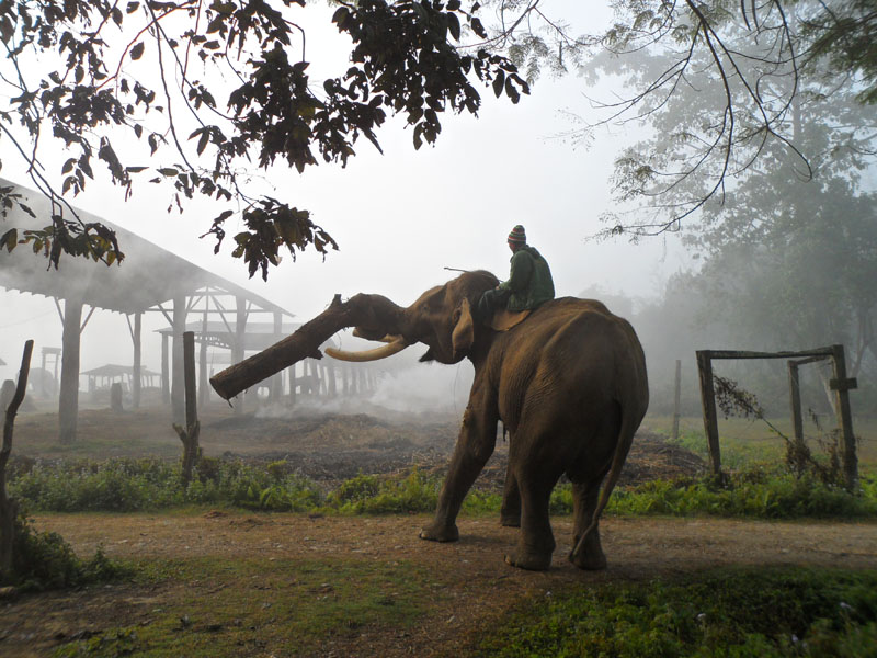 Elephant Sanctuary