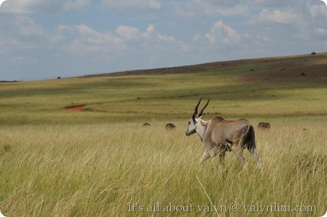 南非旅行 (2)