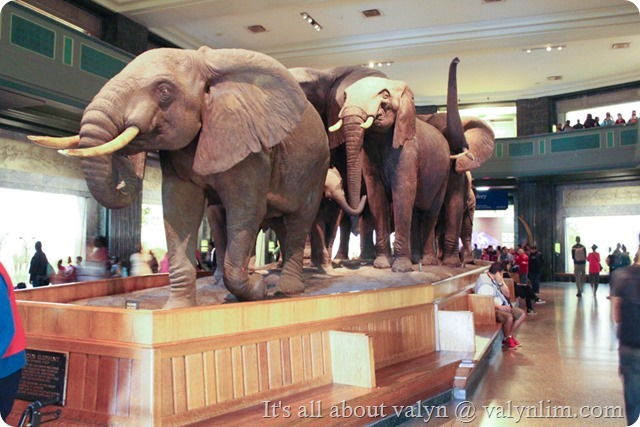 america_museum_of_natural_history_11