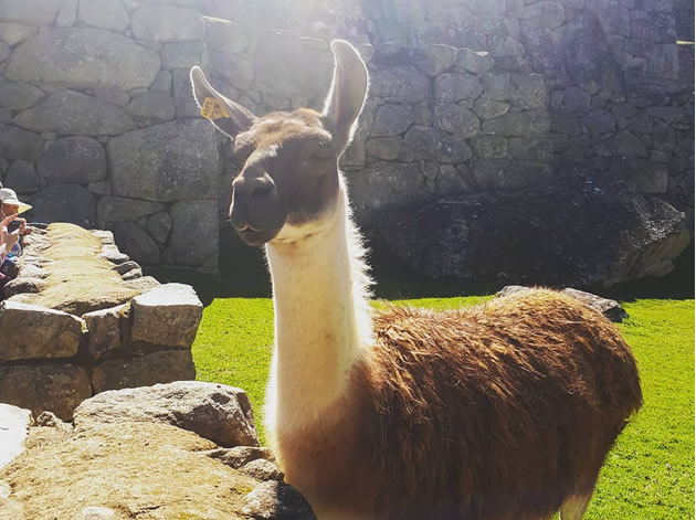 Tour Cusco Machu Picchu