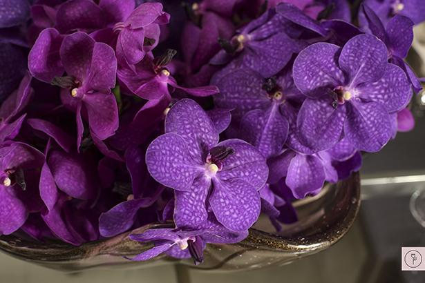 orquideas vanda