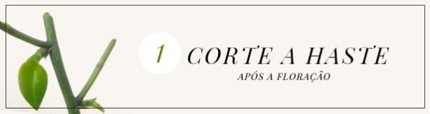 post orquideas - banner 1