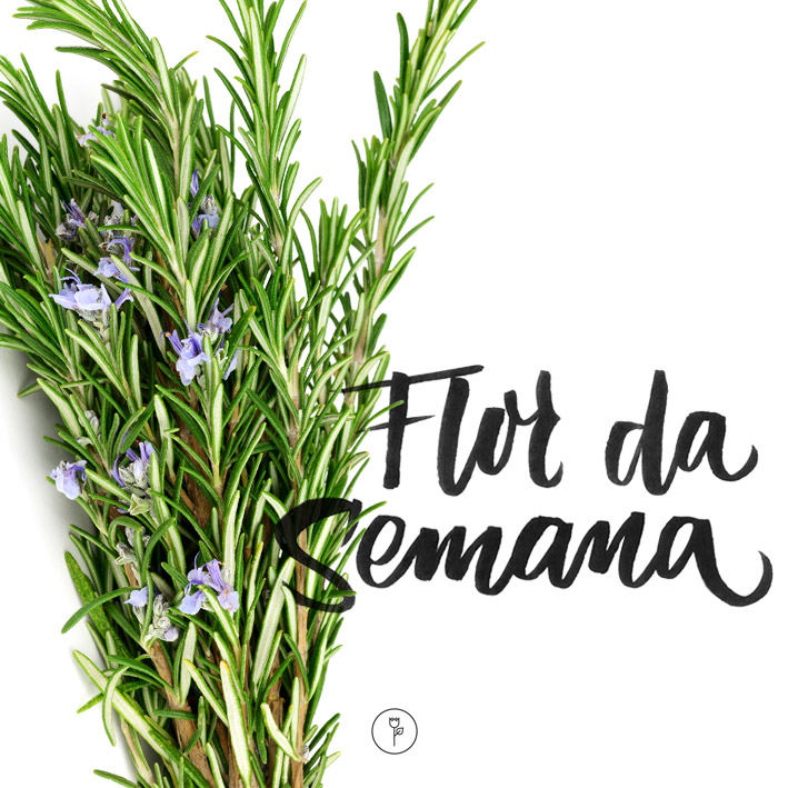 FlorDaSemana - alecrim