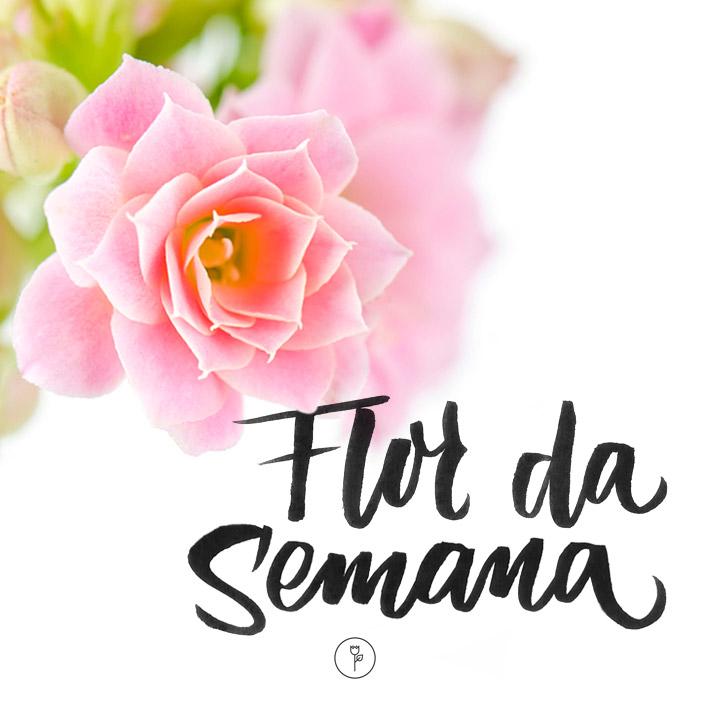 FlorDaSemana36