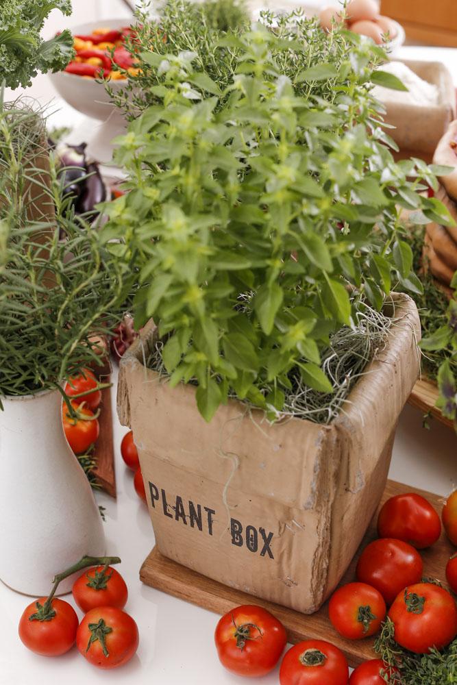 caixa de argila plant box