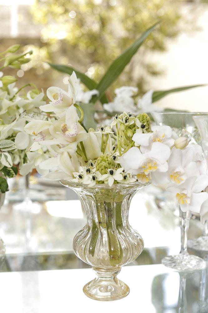 orquídeas coelogyne